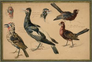 Image of Study of Birds